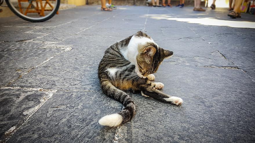 유럽3-벨기에, 고양이 불임시술 의무화 유로뉴스.jpg