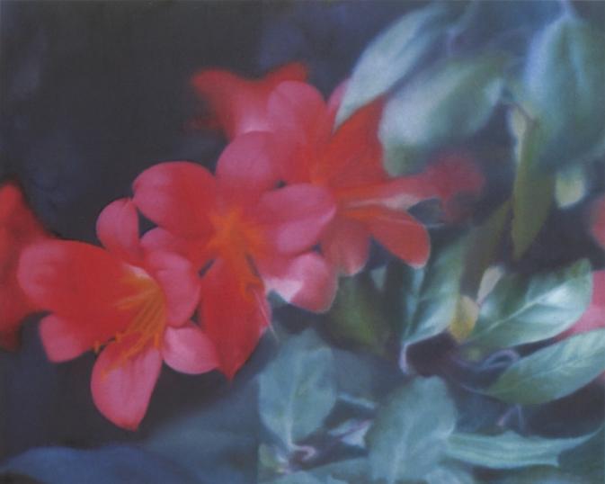 Gerhard Richter, Flowers, 1977.jpg