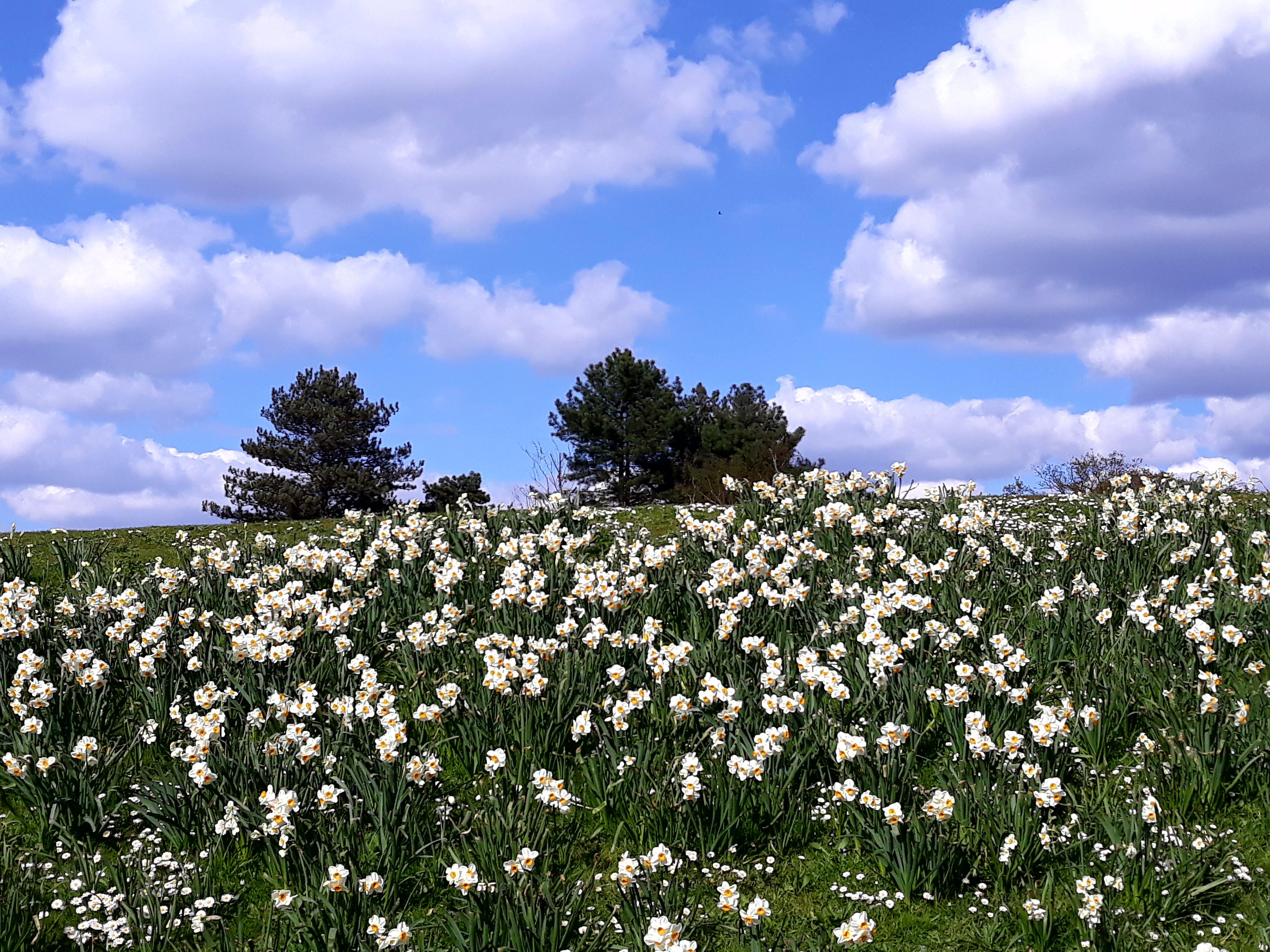 parc floral02.jpg